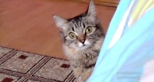 Ten kot planuje coś bardzo złego
