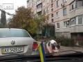 Jak zrzucić kota z samochodu?