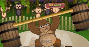 Najsilniejsza małpa świata