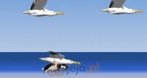 Lot albatrosem