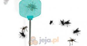 Rozwal insekty