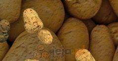 Rozwijanie ziemniaków