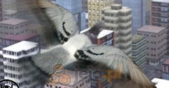 Gołąb w mieście 3