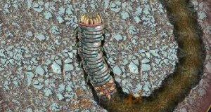 Ziemia robaka