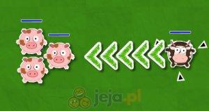 Świnie, do domu!