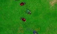 Wojna żuków