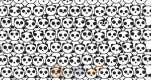 Znajdź pingwina