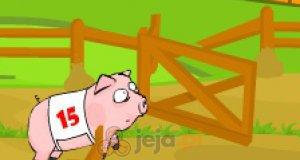 Wyścig świń