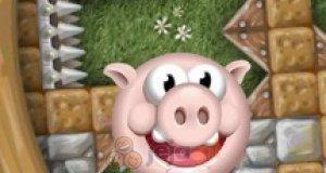 Zakręć świnkę