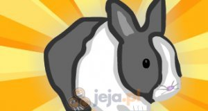 Ocal królika