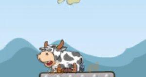 Szalone krowy - mania złota