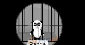 Panda snajper