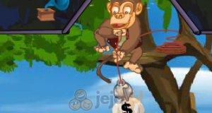 Małpka złodziej