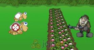 Zmutowane owce