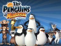 Fani pingwinów z madagaskaru