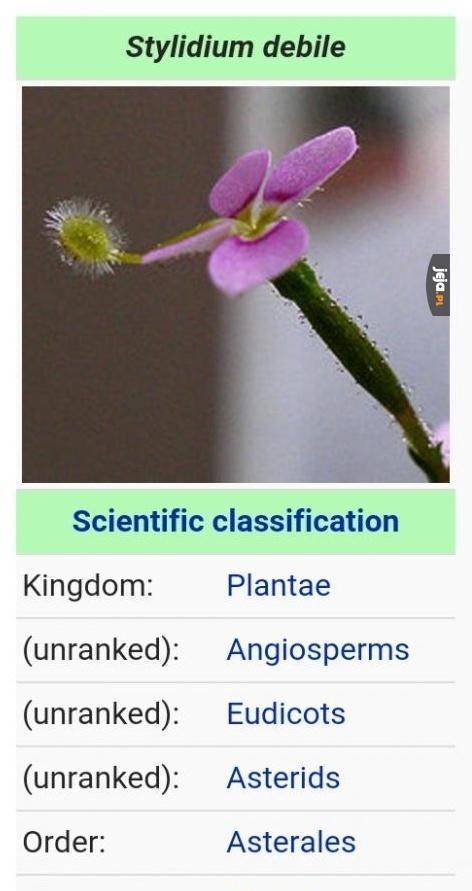 Debilna roślinka