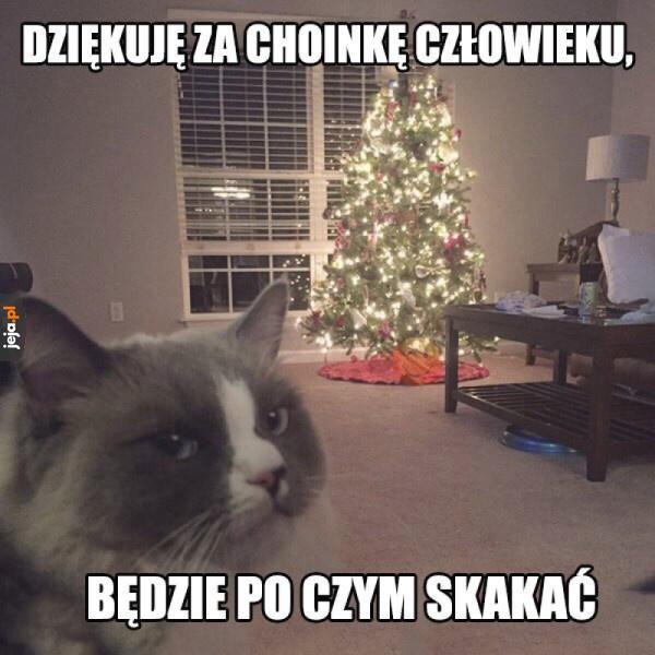 Wdzięczny kot