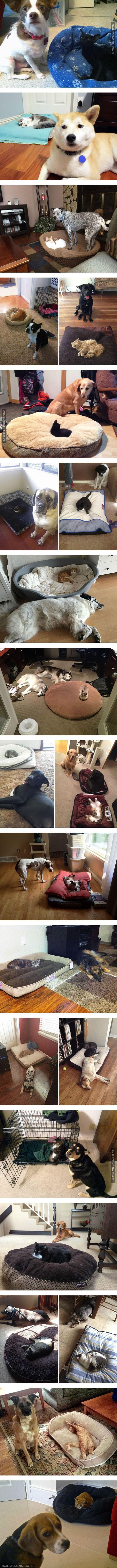 Psie posłania ukradzione przez koty