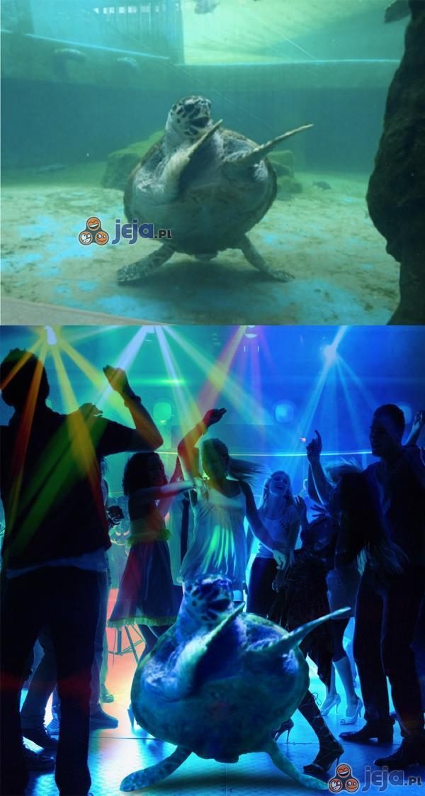 Roztańczony żółw na parkiecie