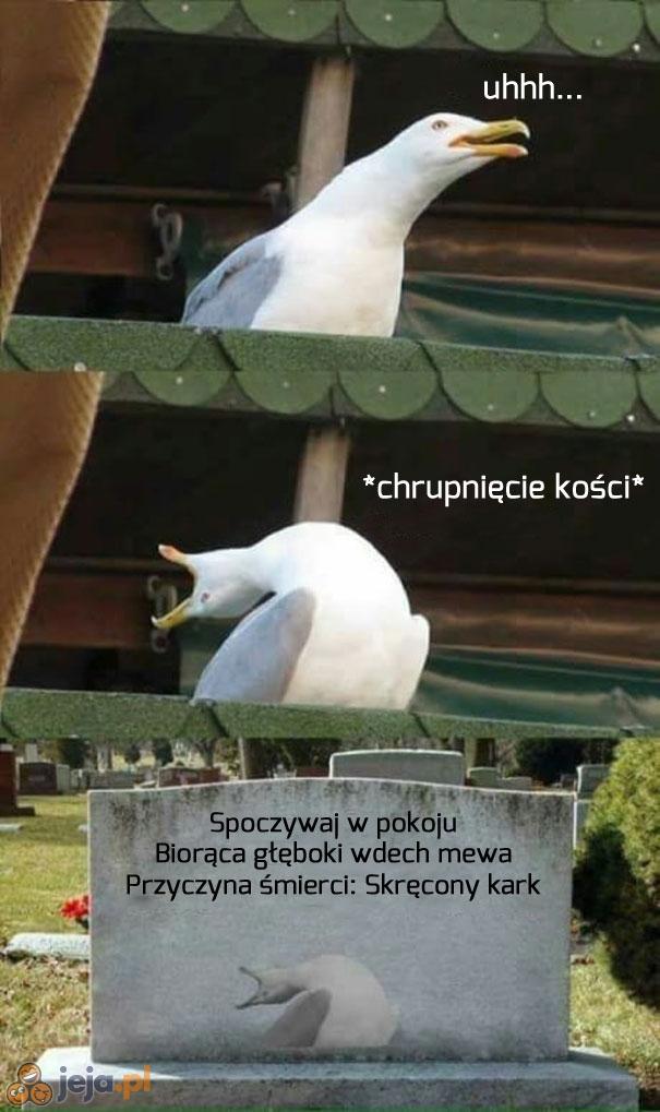 Śpieszmy się kochać memy...