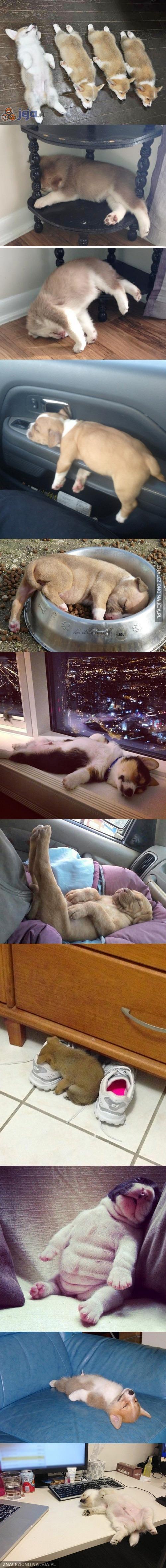 Szczeniaczki są najsłodsze, gdy śpią...