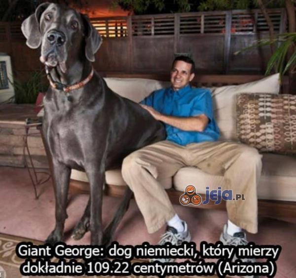Największy pies na świecie