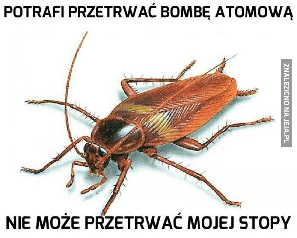 Pechowy karaluch