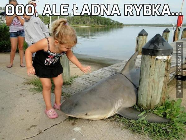 Ooo, ale ładna rybka...