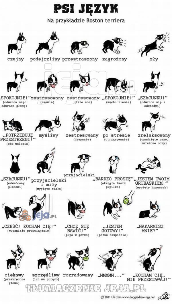 Psi język