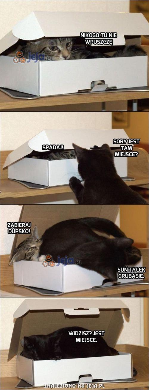 Koty i pojemny karton