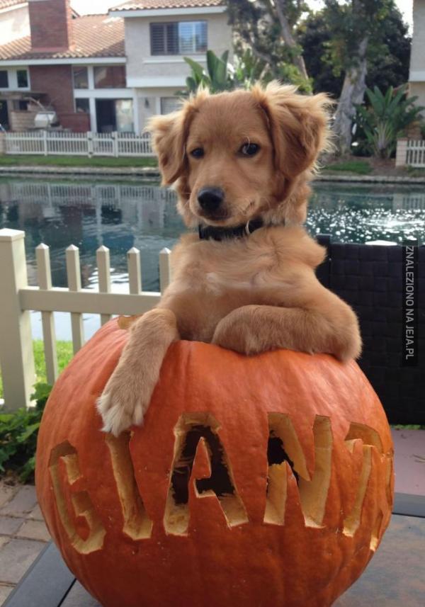 Pff, to ma być twoja dynia na Halloween?