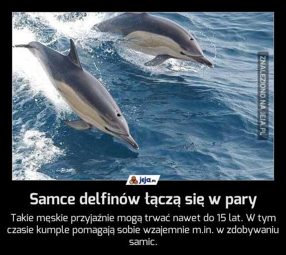 Samce delfinów łączą się w pary