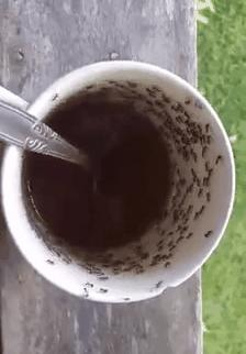 Kawa + mrówki