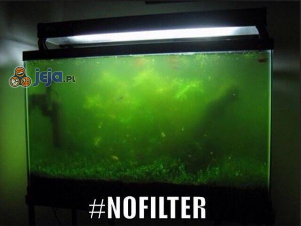 Bez filtra