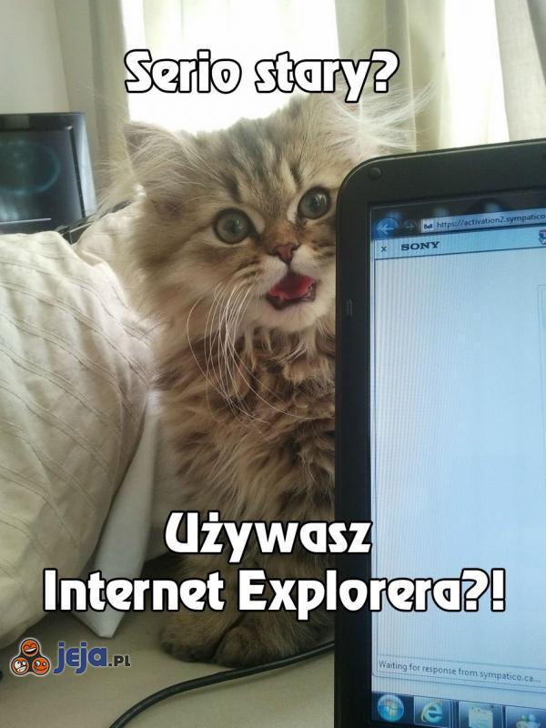 Kot nie wierzy w Twoją przeglądarkę