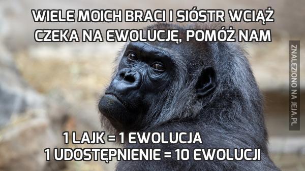 Wiele moich braci i sióstr wciąż czeka na ewolucję, pomóż nam