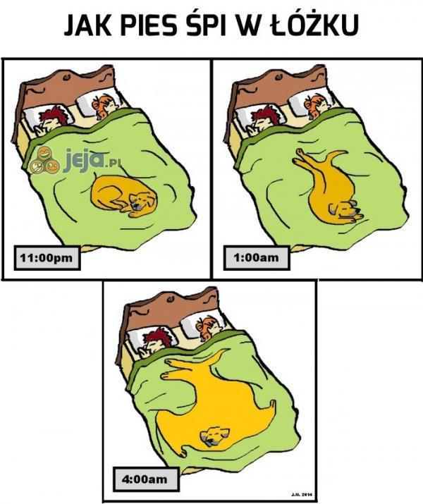 Jak pies śpi w łóżku