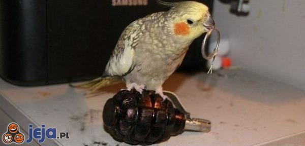 Ostatnie zdjęcie papużki