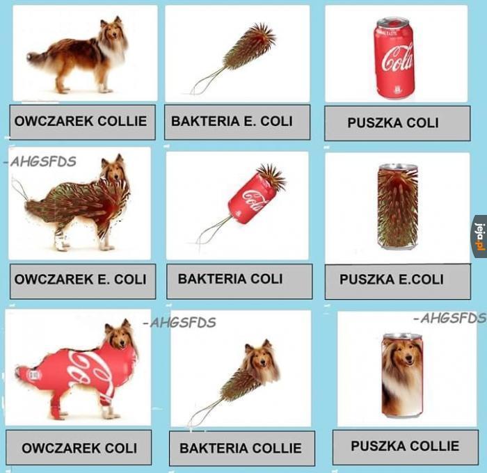 Nauka o coli