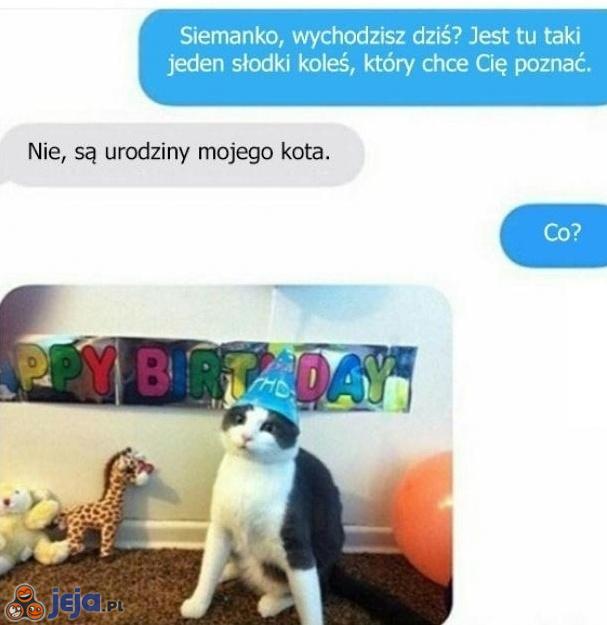 Kot ważniejszy