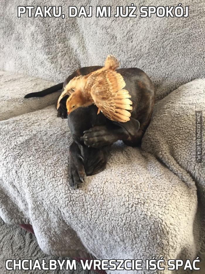 Ptaku, daj mi już spokój