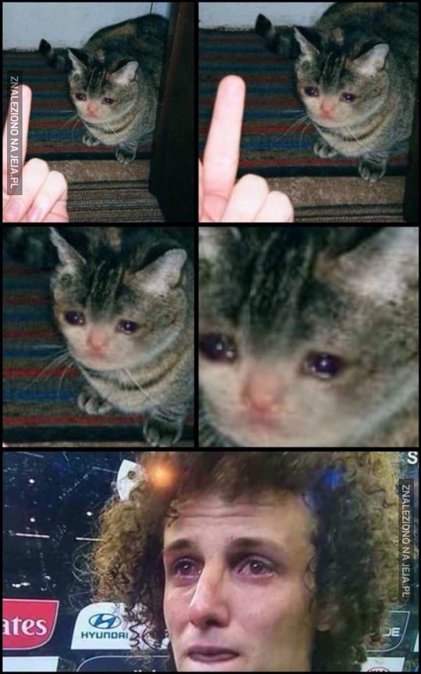 Co za biedny kotek!