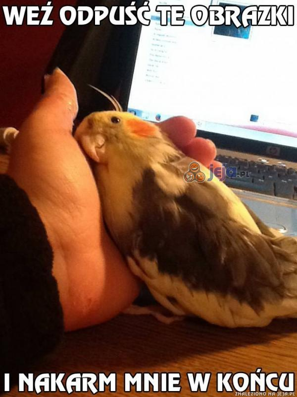 Polly ma dość obrazków