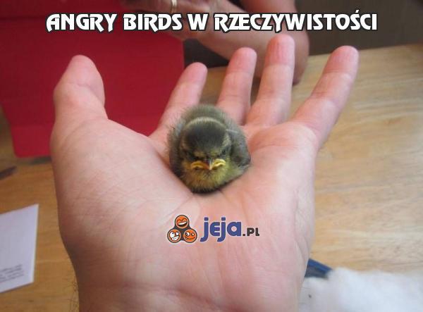 [Obrazek: 47483_angry-birds-w-rzeczywistosci.jpg]
