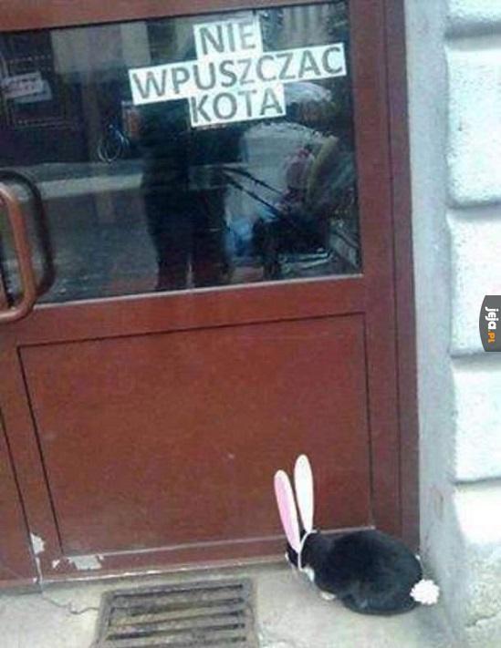 O królikach nie wspominali