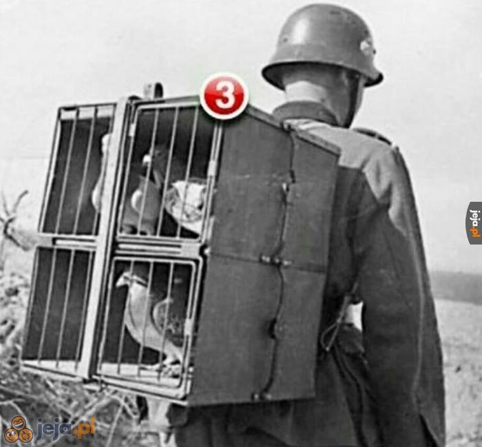 Facebook 1916