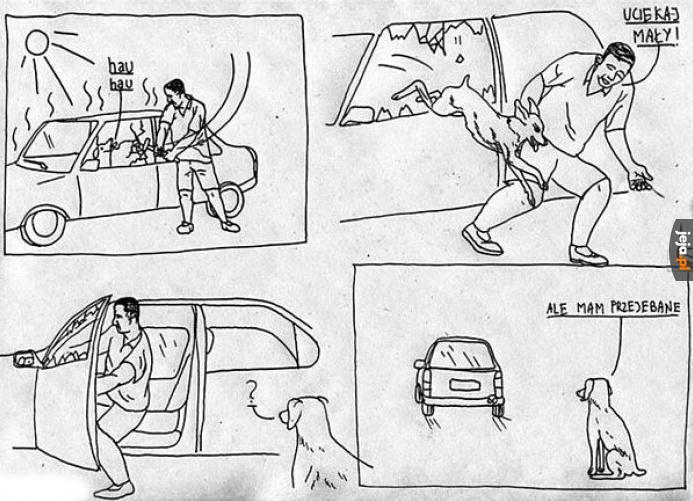 Troskliwy złodziej