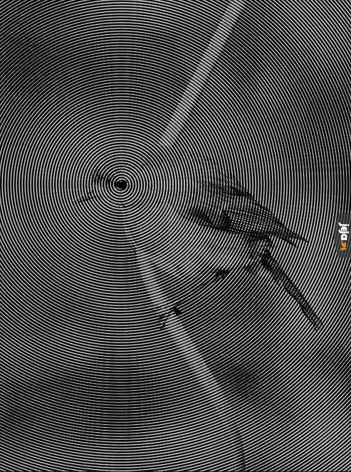 Ptasia iluzja - Scrolluj dalej