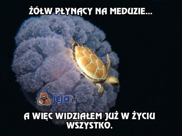 Żółw płynący na meduzie