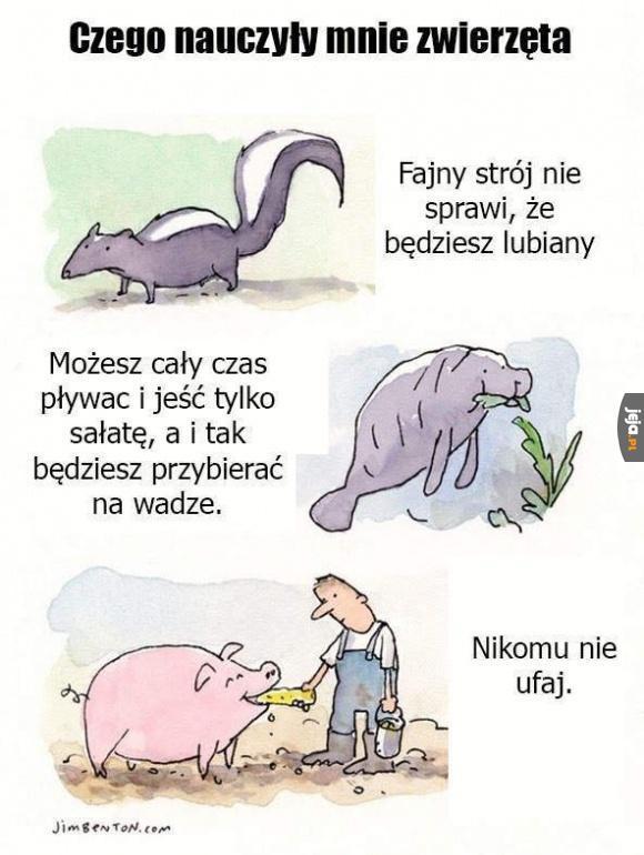 Czego nauczyły mnie zwierzęta
